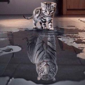 gato-olha-reflexo-vê-leão