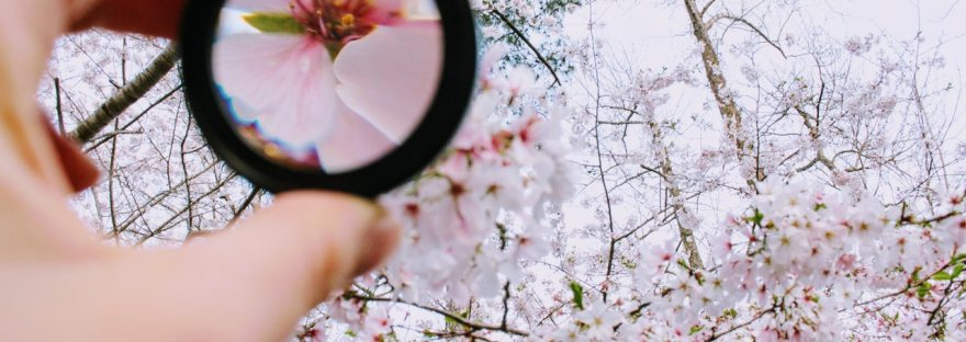 lupa-foco-flores